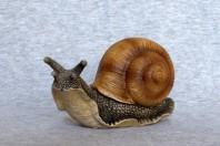 un escargot
