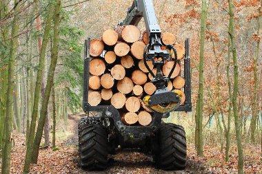 Une étude de l'IGN confirme la disponibilité forestière en France