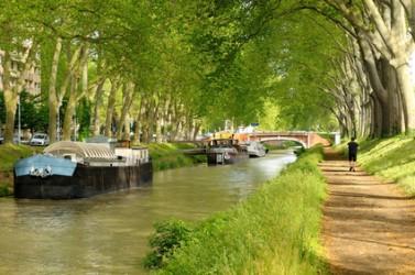 Les 42 000 platanes du canal du Midi vont être progressivement arrachés.