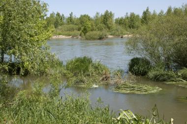 photo d'un fleuve ou d'une rivière bordée d'arbres et de végétations