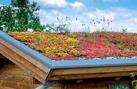 Dachflächenbegrünung
