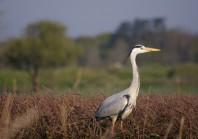 L' Île-de-France va créer une agence régionale pour la biodiversité