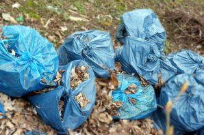 Affaire des vols de sacs poubelle : pas de révocation pour l'agent