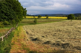 Rural landscape with hay
