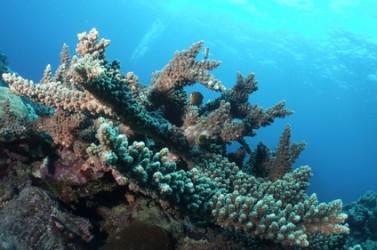construction coralienne