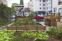 centre-ville; jardin partagé; rue des lentilles; petite france