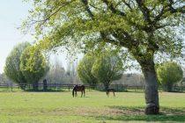 Le cheval participant à l'attractivité du territoire, les professionnels de la filière équine bénéficient en Normandie du soutien de la région dans tous les domaines.