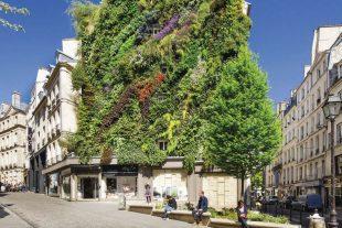 La végétalisation des immeubles, comme dans la rue d'Aboukir à Paris, crée des oasis de fraîcheur.