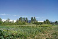 Aidée par la société locale d'aménagement foncier et d'établissement rural, l'interco du pays d'Aubagne a sanctuarisé et mis à la disposition d'agriculteurs des terrains convoités en zone d'activités.