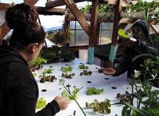 Dans le haut Mafate (île de La Réunion), des formations en aquaponie (culture de plantes et élevage de poissons) sont dispensées.