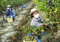 Grâce à Wizifarm, Des profils de personnes précaires matchent avec des emplois agricoles
