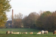 Industrie_Vaches_Anor