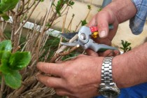 jardinier municipaux