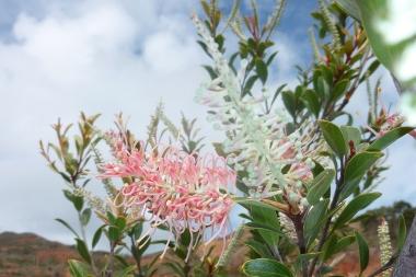Innovation recherche et d veloppement tous les articles d 39 actualit - Depollution par les plantes ...