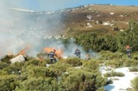 incendie de végétation