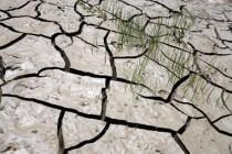 Terre craquelée par la sécheresse