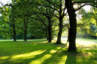 Combien coûte (et surtout rapporte) la nature en ville ?