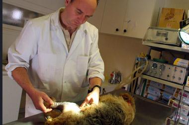 Chien bléssé chez un vétérinaire