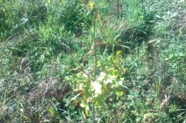 Villeneuve du Bois apräs plantation oct 2013 (2)
