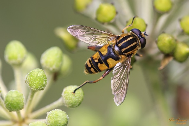 Les effectifs d'abeille ont chuté de 20 % en vingt ans.