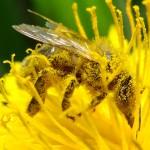 « Il y a une convergence d'intérêts entre les agriculteurs et les apiculteurs », selon l'ancienne ministre Delphine Batho.