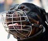 Les chiens catégorisés : compétences des agents de police municipale et des gardes champêtres