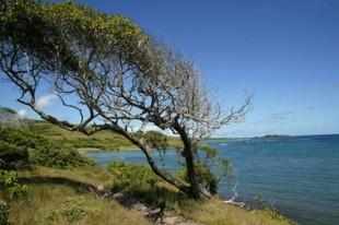 Cote maritime. Mer et arbre