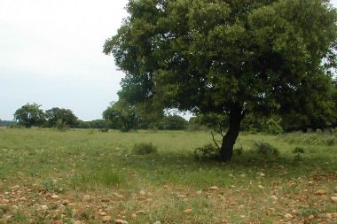 Plaine de Crau