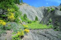 Dans les Alpes-de-Haute-Provence, des saules ont été plantés  pour ralentir l'érosion.