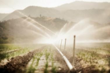 irrigation agricole2