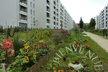 renovation urbaine borloo
