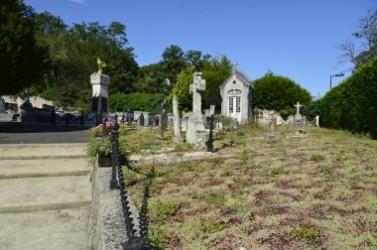 Des plantes couvre-sols au cimetière de Lardy.