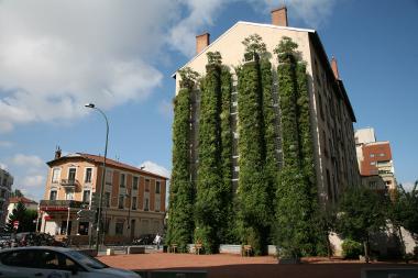 Murs végétalisés, une palette de techniques à maîtriser
