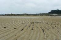 plage-sable-lannion-une