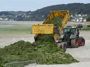 Enlèvement d'algues vertes échouées en baie de Lannion (Côtes-d'Armor), à l'été 2010, année du lancement du premier plan breton
