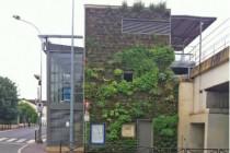 une-mur-vegetal