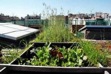 Réintroduction de cultures nourricières en ville  sur les toits des immeubles